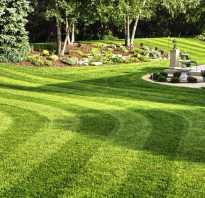 Что такое партерный газон или в чем феномен партера