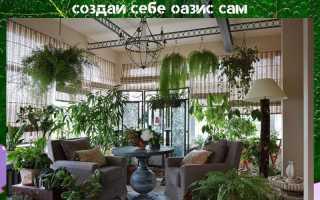 Как устроить зимний сад в городской квартире?